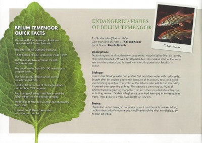 Belum Rainforest Resort - Fishes - Pg 5
