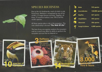 Belum Rainforest Resort - Species - Pg 4